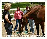 Horse News for June…