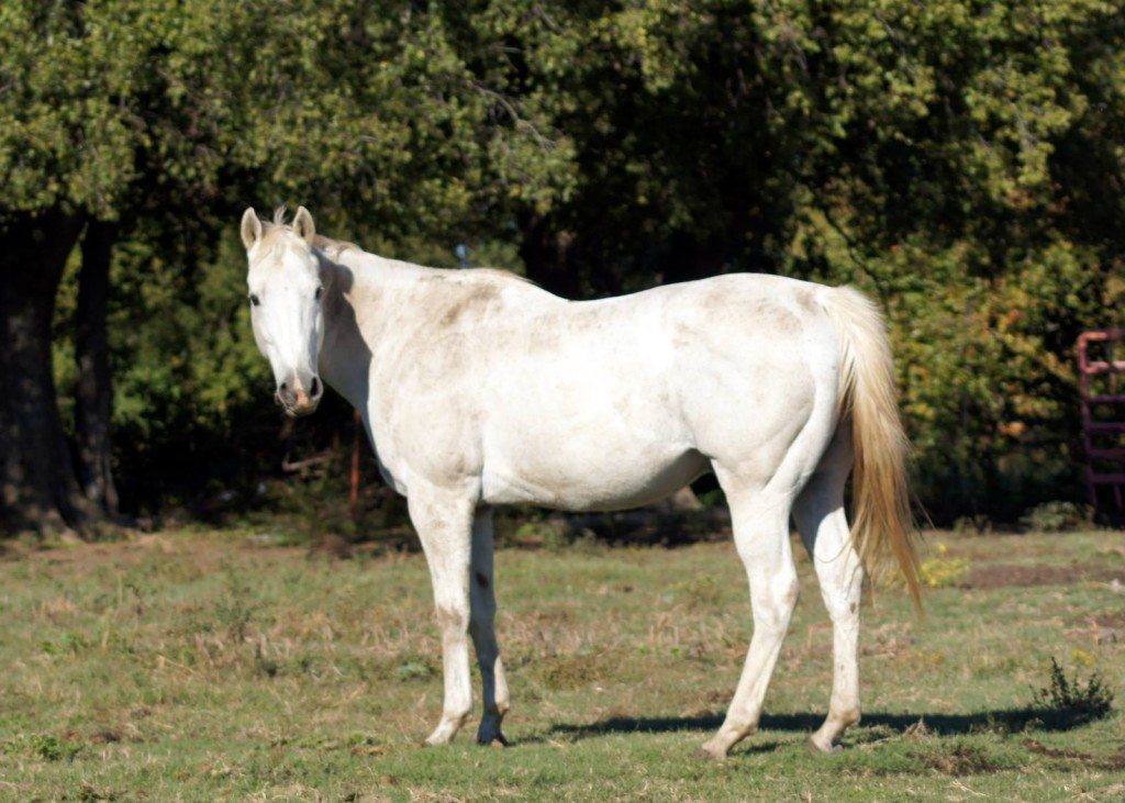 Son of Mariah - October 2013