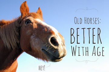Horse News – May 2014