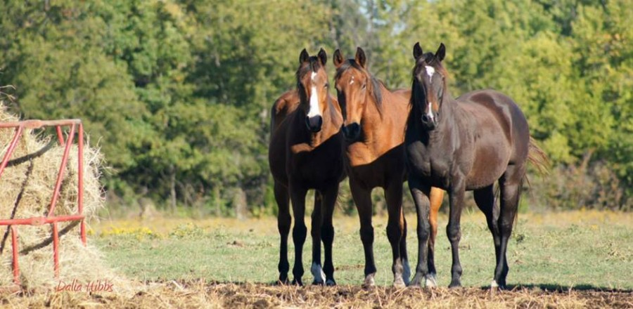 Horse News You Can Use – July 2015